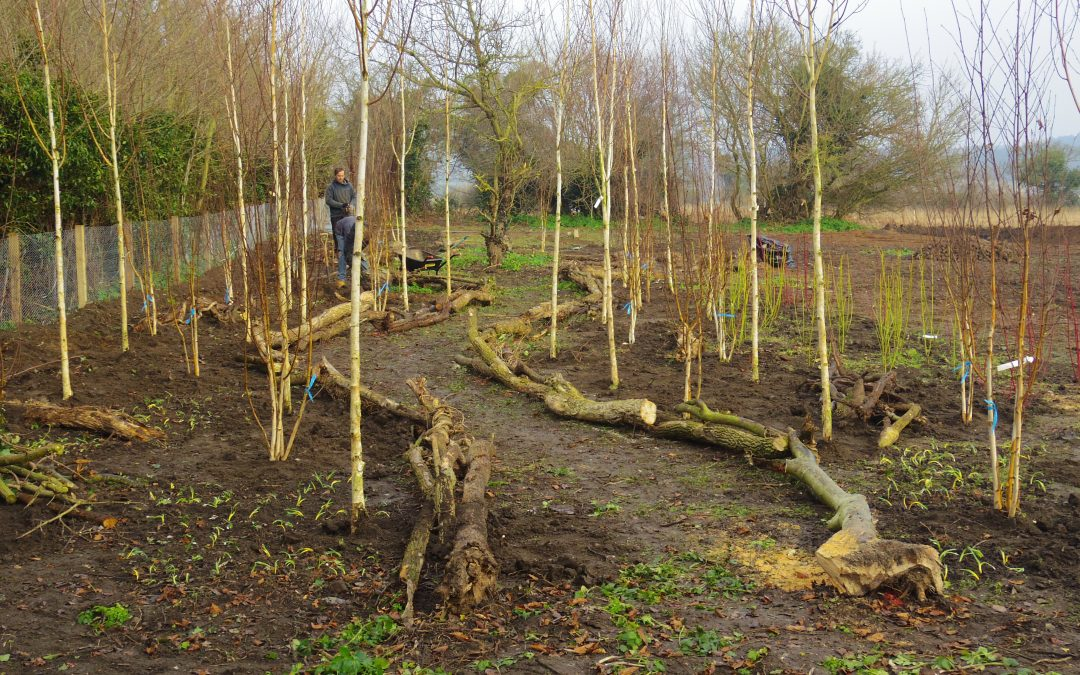 Wild garden Diary Thornage